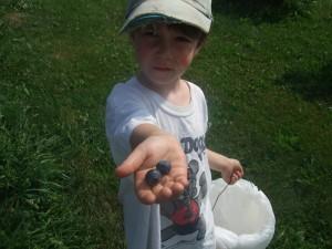Blueberry picking at Estes 2, 8-4-10