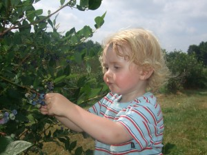 Blueberry picking at Estes 4, 8-4-10