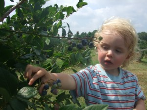 Blueberry picking at Estes 5, 8-4-10