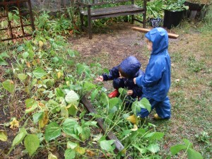 Picking Green Beans in the Rain, Aug. 25, 2010, 1