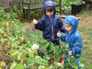 Picking Green Beans in the Rain, Aug. 25, 2010, 3