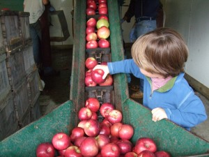 Cider-Making at Hope Orchards 2, 10-8-10