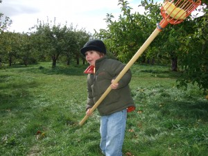 Connor with the apple picking pole