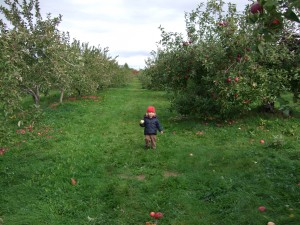 Ian in the apple orchard