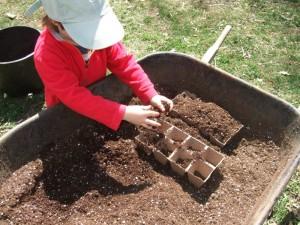 Connor planting seedlings