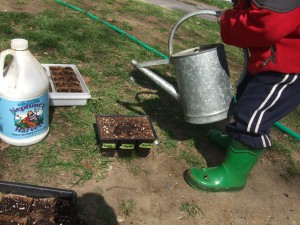 Connor planting seedlings 3