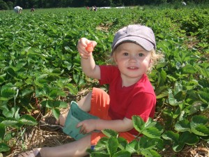 Ian showing strawberry in patch, june 2010