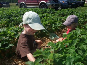 Connor and Ian sitting in the strawberry patch, June 2010