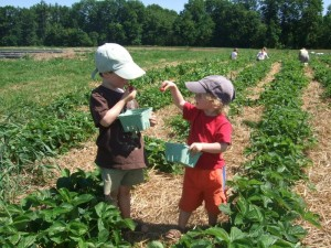Connor and Ian standing in the strawberry patch, June 2010
