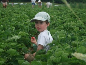 Connor sitting in strawberry patch