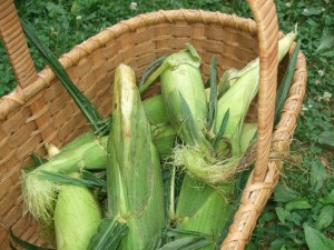 Corn in a basket, 7-20-10