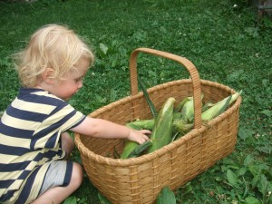 Ian reaching in to basket of corn, july 2010