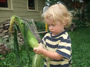 Ian begins to shuck corn, July 2010