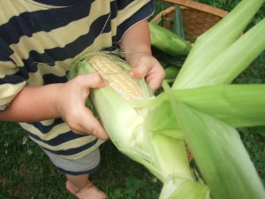 Ian shucking corn close up 2, July 20, 2010