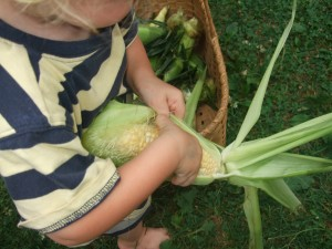 Ian pulling the corn out of the husk, July 2010