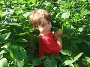 Connor in the beans, July 2010