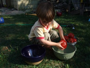 CAnning tomatoes, Sept. 2, 2010, 1