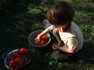 CAnning tomatoes, Sept. 2, 2010, 3