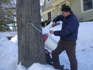 Tapping the maple, Feb. 20, 2011