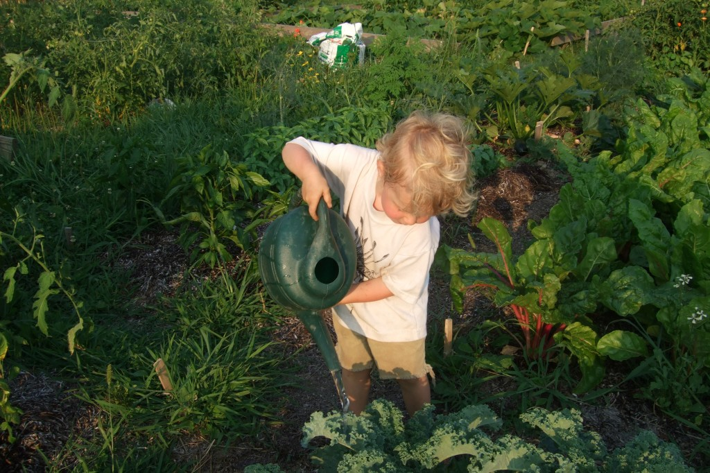 Evening watering at the community garden plot, summer, 2011