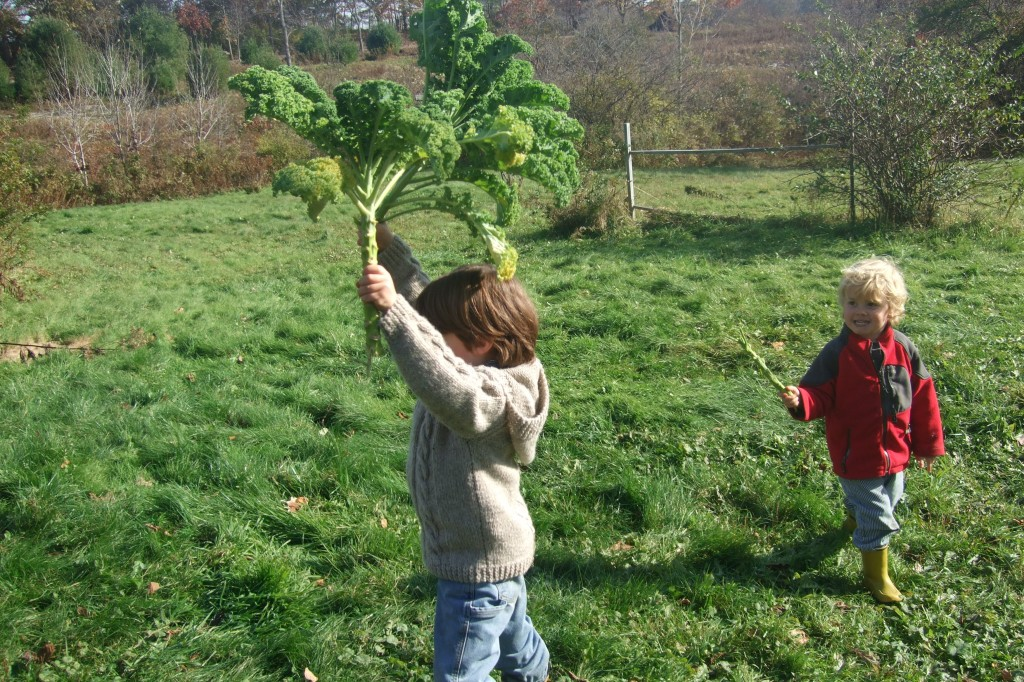 Putting up the kale, Nov. 2011