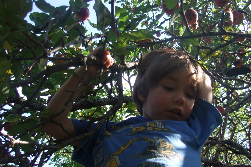 apple picking/apple sauce, 2011-2012