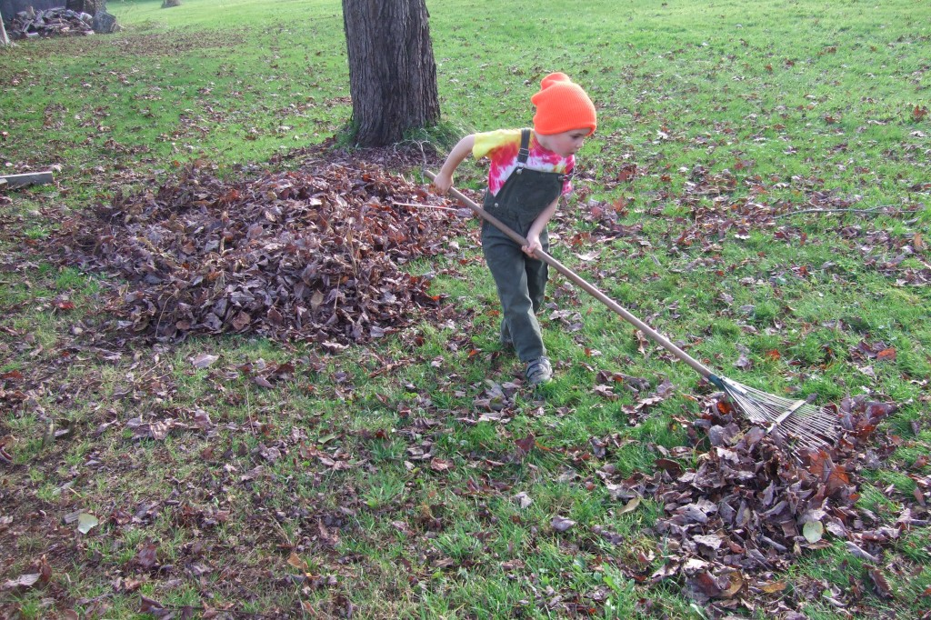 Connor raking