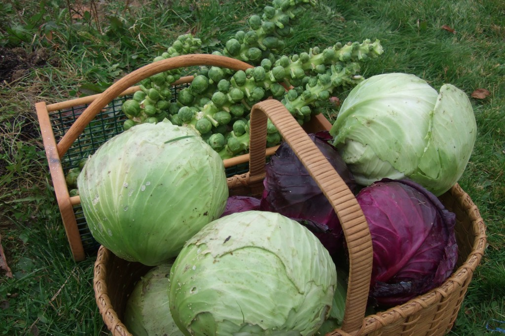 brussels and cabbage in basket