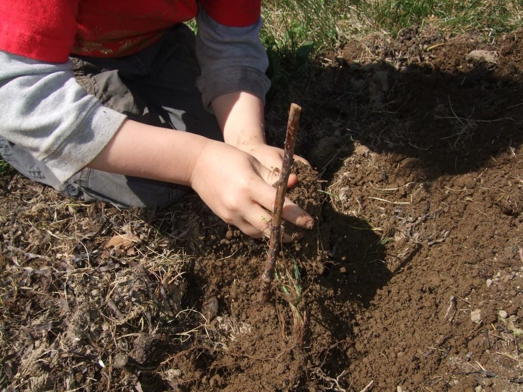 ian planting