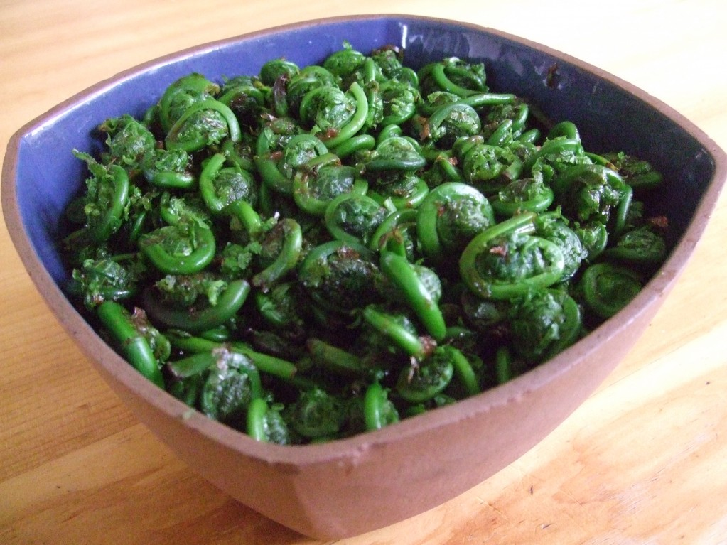 fiddleheads 2013